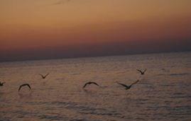 birdswater