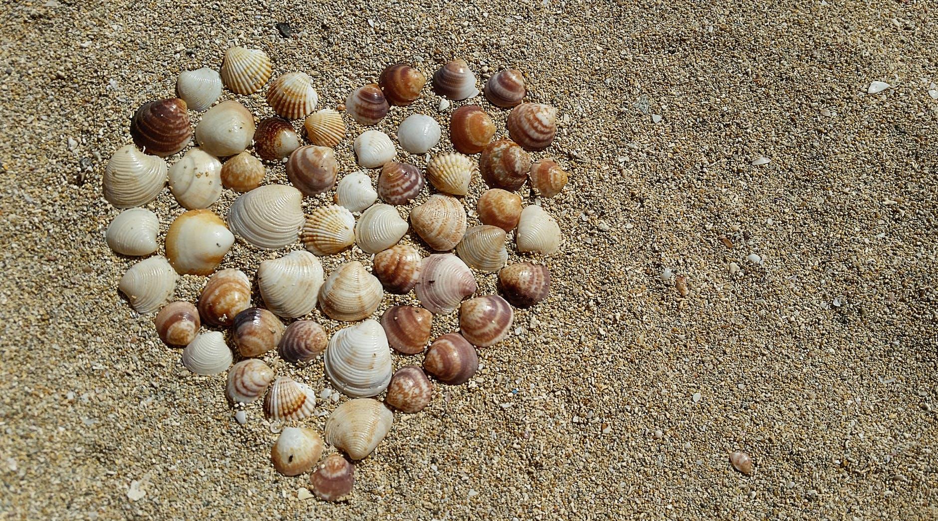 heart-mussels-harmony-love-161002.jpeg