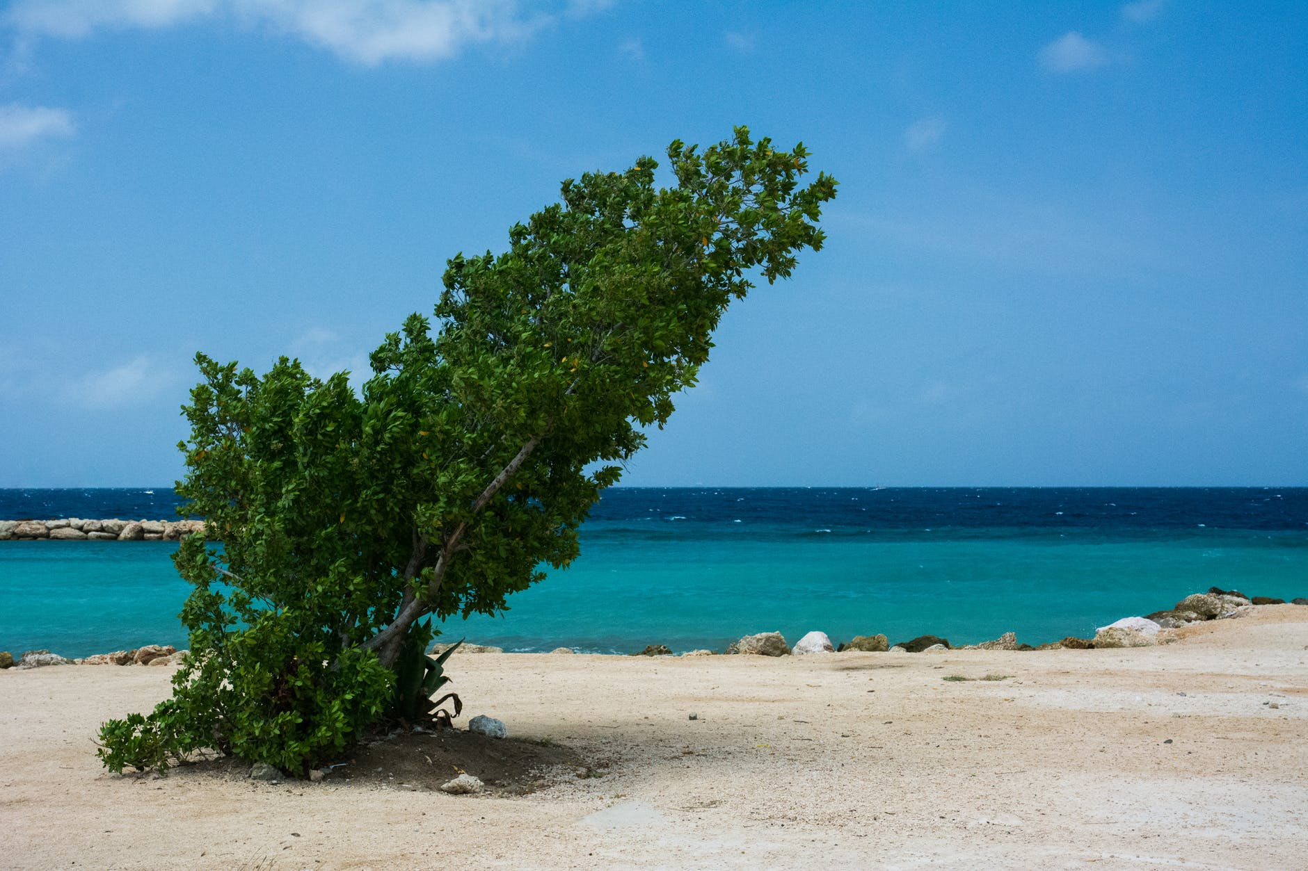 sea-beach-storm-tree.jpg