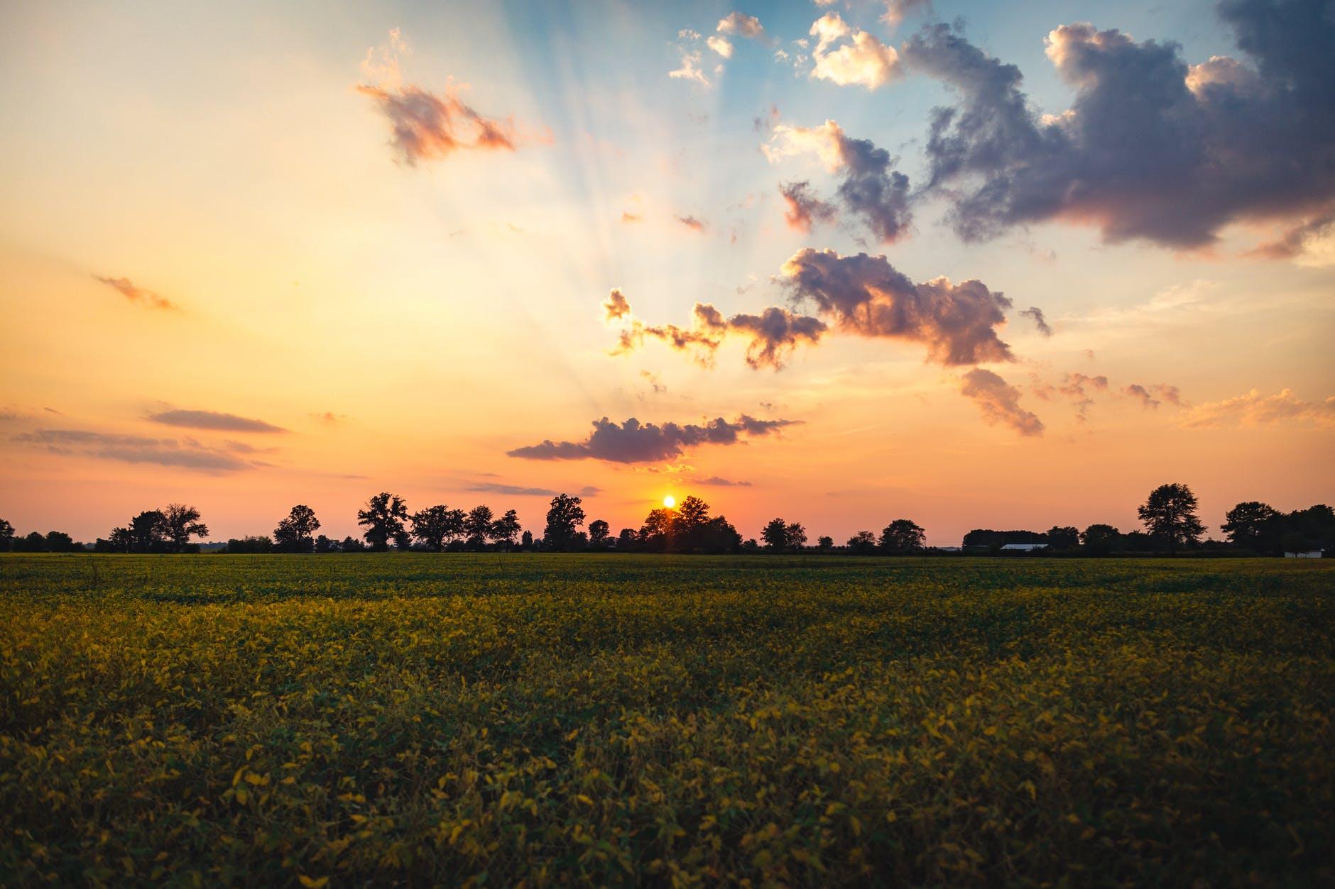 sunset sunrise nature field