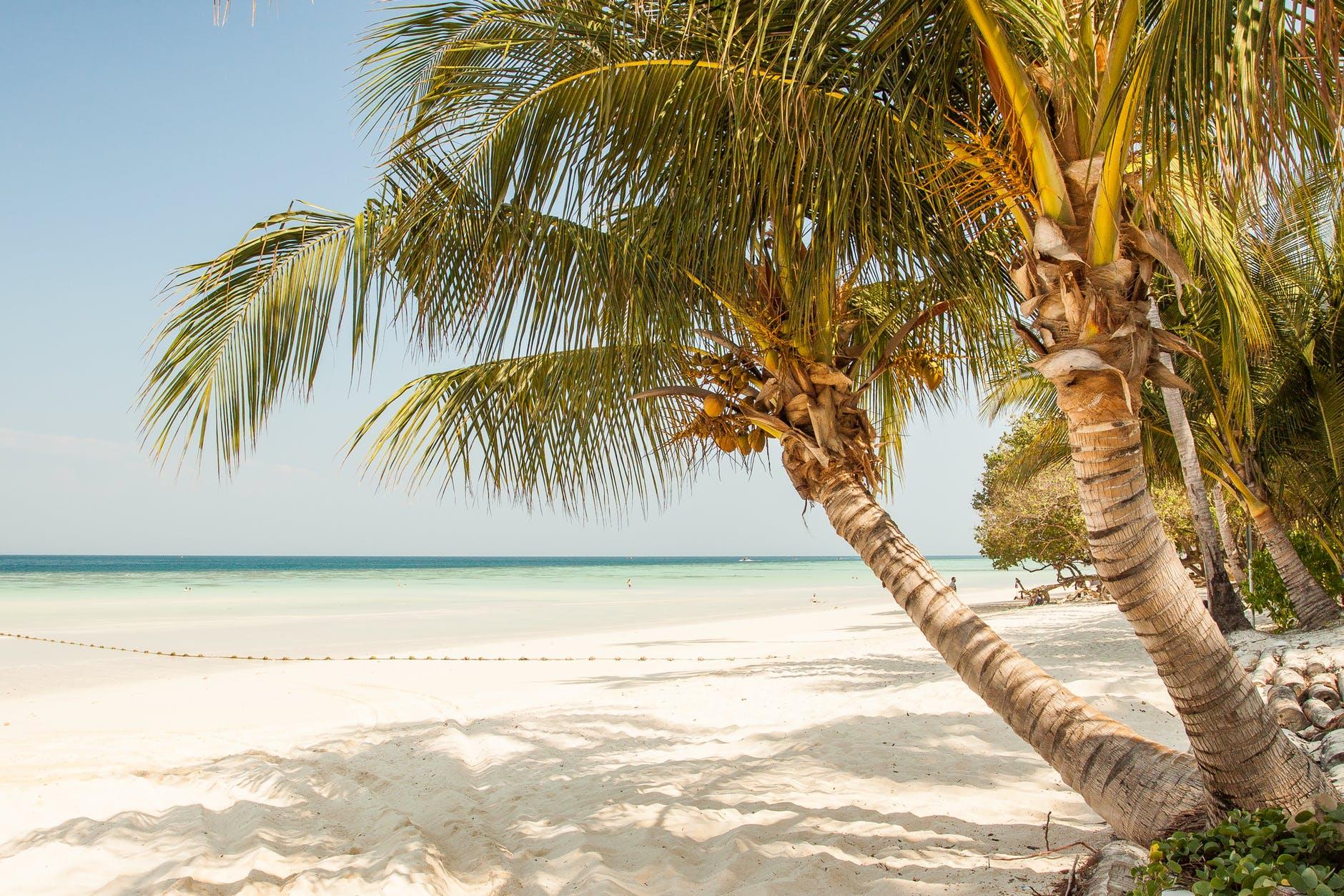 beach coast coastline coconut trees